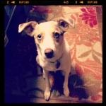 Runner Pup
